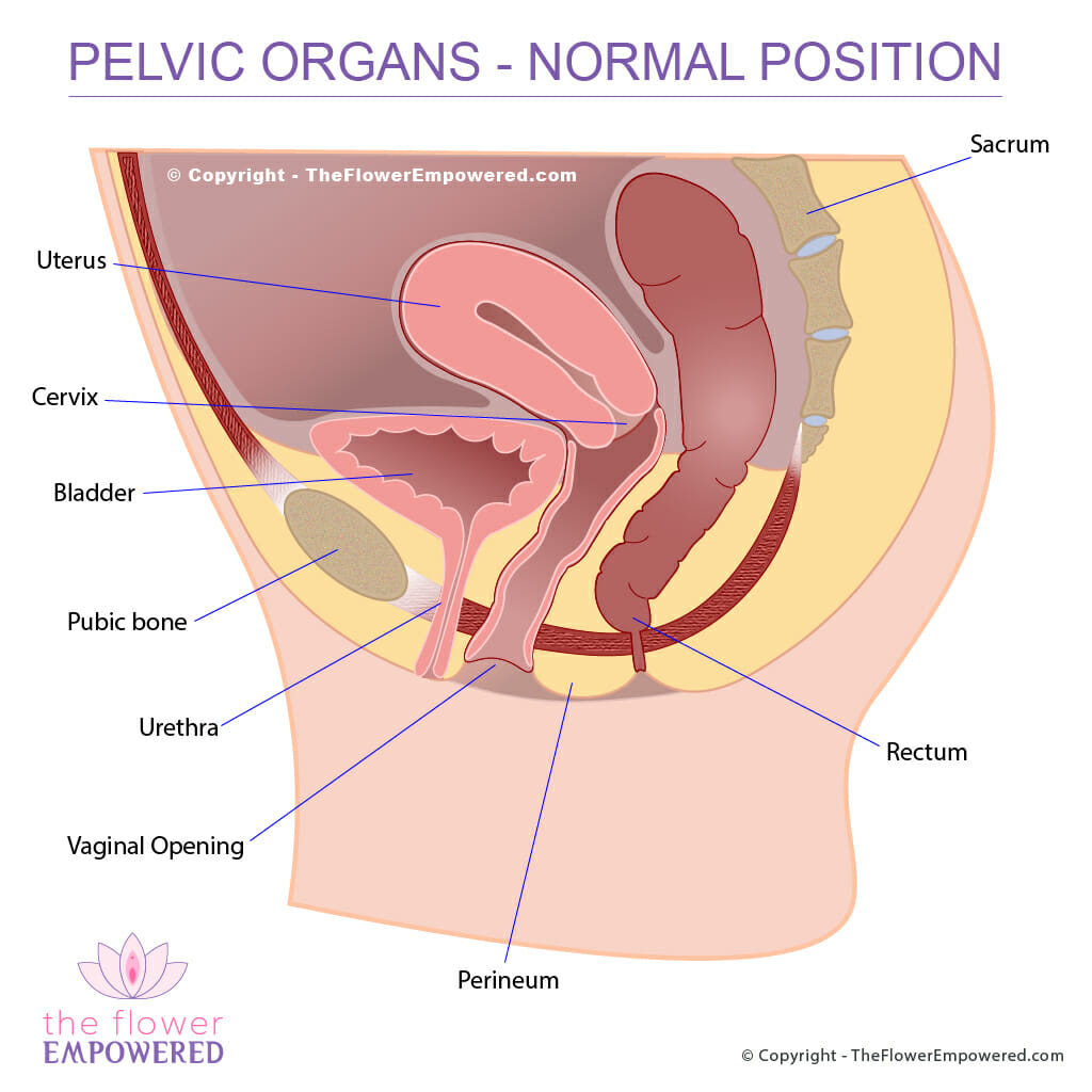 Pelvic Organ Prolapse Pop Affects 50 Of Women Globally